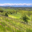 Hills and vineyards of Piedmont, Italy. — Foto de Stock