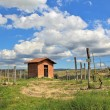 Rural house among vineyards. Piedmont, Italy. — Stockfoto