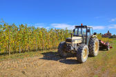 Tractor at harvesting in Piedmont, Italy. — Stock Photo