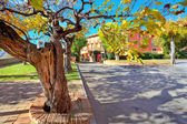 Old tree with leaves gows in small town. — Stock Photo