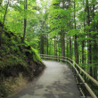 Green forest in Germany. — Stock Photo