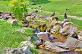 Torrente scorre sul prato verde nel parco botanico. — Foto Stock