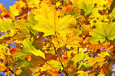 Colorful autumnal leaves. — Stock Photo