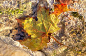 Yellow leaf under the water. — Stock fotografie