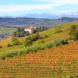 Autumnal view on vineyards in Piedmont, Italy. — Stock Photo