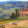 Stock Photo: Old castle and vineyards in Piedmont, Italy.