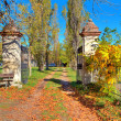 Country road among trees covered with yellow leaves in Italy. — Foto de Stock