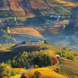 Rural houses and autumnal vineyards in Piedmont, Italy. — Stock Photo #31449411