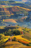 Rural houses and autumnal vineyards in Piedmont, Italy. — Stock Photo