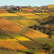 Vineyards on the hills in autumn in Piedmont, Italy. — Stock Photo
