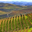 Hills and vineyards in autumn in Piedmont, Italy. — Stock Photo
