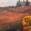 Autumnal view of vineyards in Piedmont, Italy. — Стоковая фотография