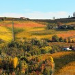 Stock Photo: Vineyards on hills in autumn in Italy.