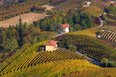 Autumnal vineyards on the hills of Piedmont, Italy. — Stock Photo