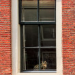 Cat on windowsill of red brick house. — Stock Photo