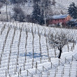 Vineyards covered with snow in Piedmont . — Stock Photo