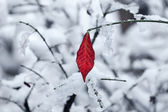 Leaf on the twig covered with snow. — Stock Photo