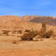 Red mountains in Timna park. — Stock Photo #39087261