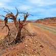 Stock Photo: Dead tree on roadside in desert.