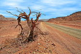 Dead tree on roadside in desert. — Stock Photo