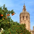 Orange tree and Valencia Cathedral. — Stock Photo