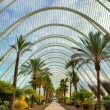 Palms alley in City of Arts and Sciences of Valencia. — Stock Photo #41865571