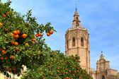 апельсинового дерева и валенсии собор. — Стоковое фото
