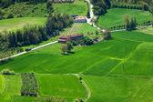 Campos verdes de piemonte na primavera. — Fotografia Stock