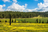 Blooming meadows in spring. — Stock Photo