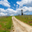 Rural road and vineyards under cloudy sky in Italy. — Stock Photo