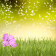 Green grass with beautyful flowers — Stock Photo