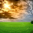 Field of grass and perfect blue sky sun set - Stock Photo