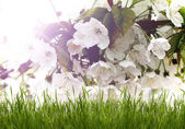 Beautiful white flowers with green grass — Stock Photo