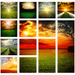 Beautiful fields collage — Stock Photo
