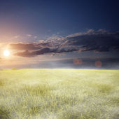 Morning fog over the wheat field — Foto Stock