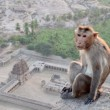 Monkey — Stock Photo #12307580