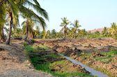 Hampi, índia — Foto Stock