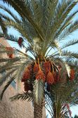Sahara Oasis — Stock Photo