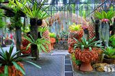 Nong Nooch Tropical Garden — Stock Photo