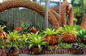 Nong nooch jardín tropical — Foto de Stock
