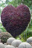 Nong nooch tropical garden — Photo