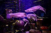 Akvarium Atlantis palm hotel — Stockfoto