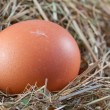 Brown chicken egg in a nest — Stock Photo
