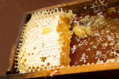Honeycomb with honey and wax — Foto Stock