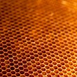 Honeycomb with honey and wax — 图库照片