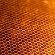 Honeycomb with honey and wax — Стоковое фото