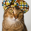 Cat in hat in studio — Stock Photo #18341541