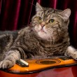 Cat with guitar in studio — Stock Photo #18341601