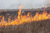 Burning dry grass — Stock Photo