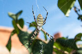 Spider in a web — Stock Photo